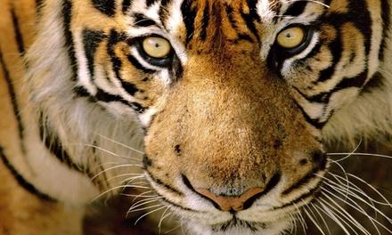 1 accès pour 1 personne à 14,50 € au parc animalier Le Monde Sauvage à Liège